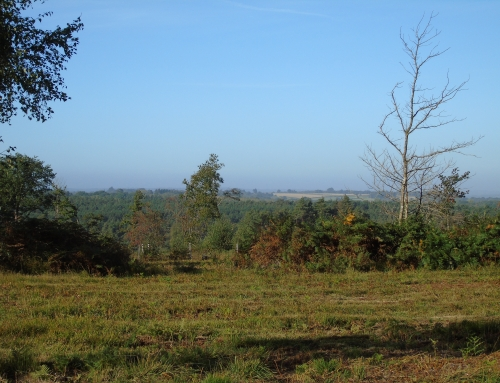 Bond's Heath View across Broadwater Warren