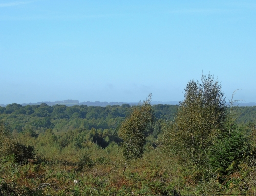 View from bonds birdhide looking across to ashdown forest