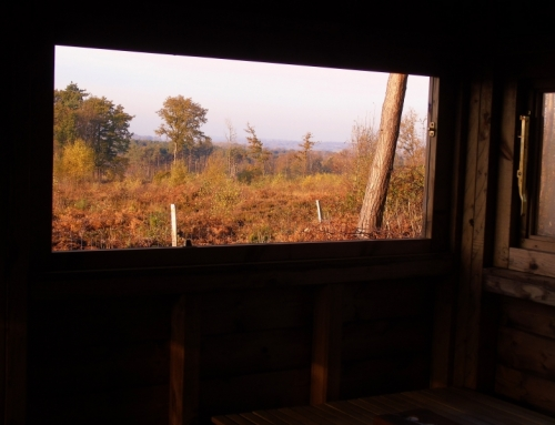 View from inside Bird Hide across Broadwater Warren