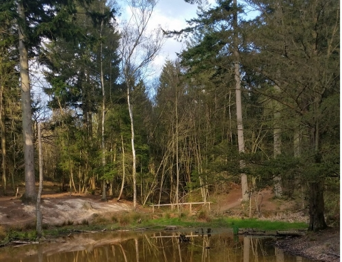 Favourite Walks: Hargate Forest and Friezland Wood