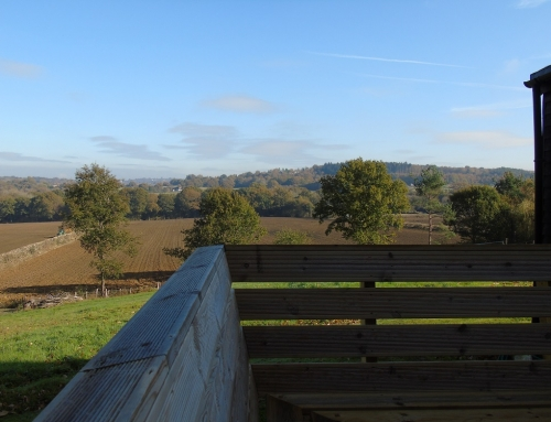 View from decking November morning