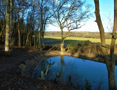 View from in front of Flying Horse cottage looking at pond and Spratsbrook Farm
