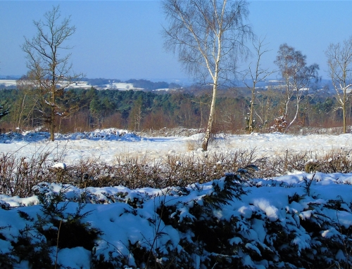 View across Bond's Heath, snowy morning