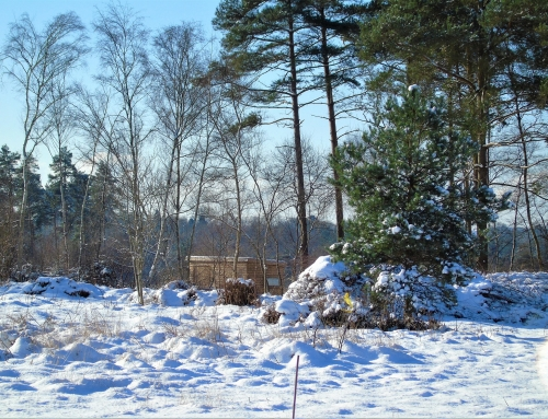 view of bird hide in snow