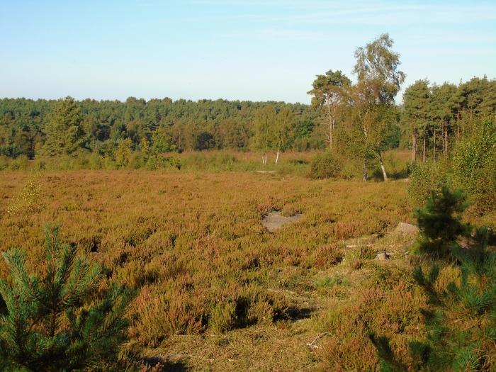 View from Bond's heath across heathland in RSPB Broadwater Warren